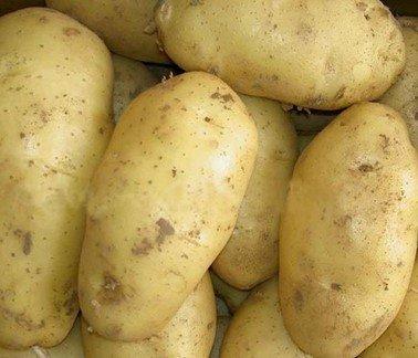 Молодой ранний картофель сорт Весна
