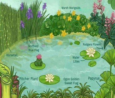 план водоёма