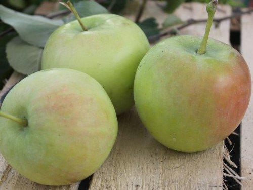яблоки тавагуй