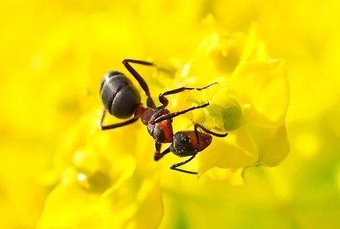 Избавится от муравьёв