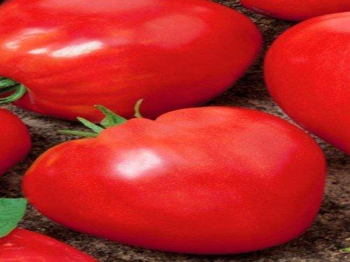 почему не цветут помидоры