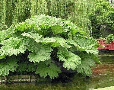 Растения рядом с водоемом