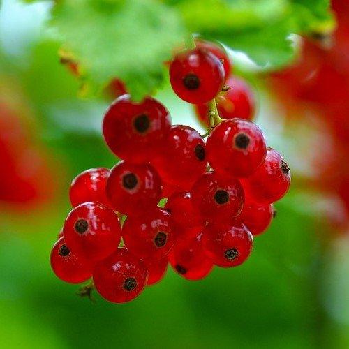 Красная смородина лайфхаки