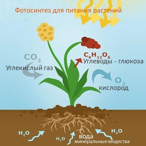 Подкормки растений