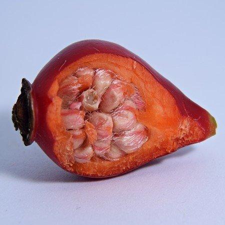 что внутри ягод шиповника