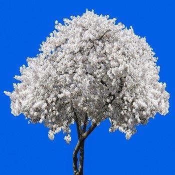 Размышления о деревьях