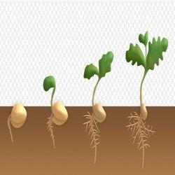 сроки посадки семян