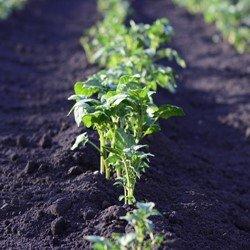 Шесть типов почвы