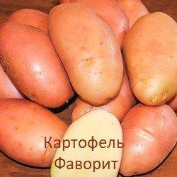 Сажаем урожайный картофель