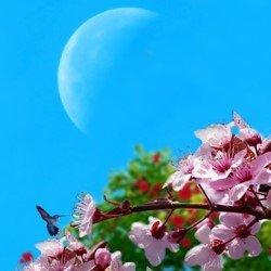 Луна и работы в саду