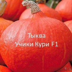 Правила посадки тыквы