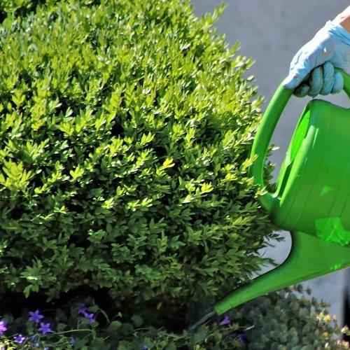 Как правильно поливать растения